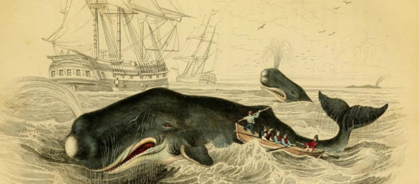 Sinking of the Nantucket whaleship Essex by a whale